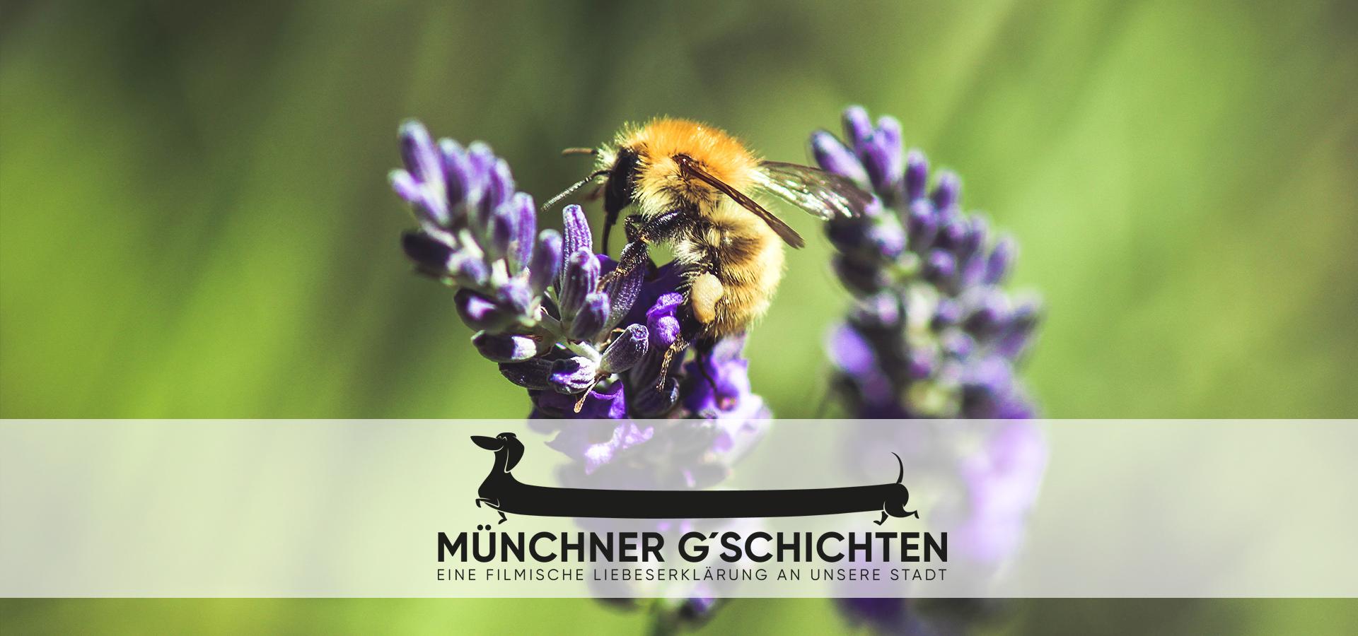 Ein Himmel voller Bienen - Ein Film der Münchner G'schichten